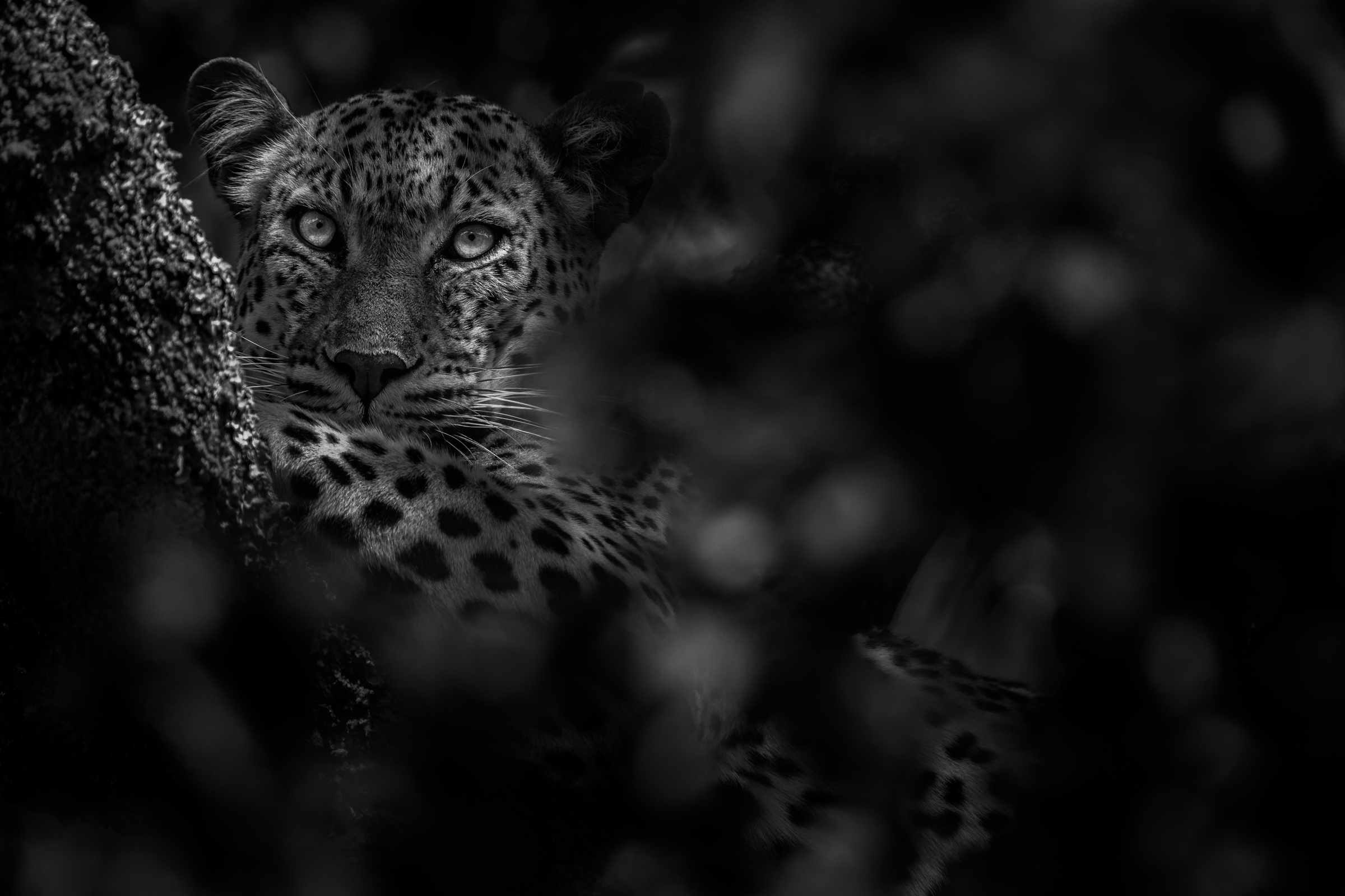 Spots and Shadows    (4/15)